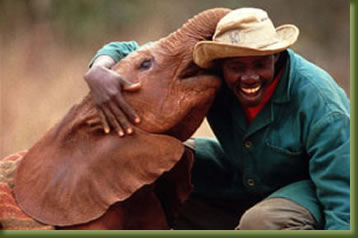 Elephant Orphanage, Nairobi