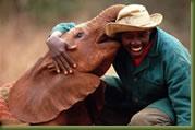 Nairobi Elephant Orphanage