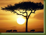 Tanzania Safari - Sunset