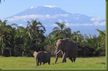 Kenya Safari - Amboseli elephants