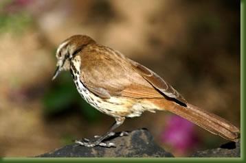 Kenia Adventures - Ornithological Safari