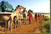 Kenia Adventures - Camel Safari