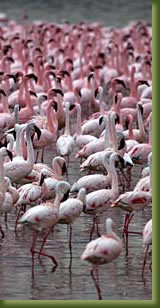 Kenia Adventures - Lake Nakuru
