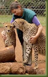 Safari Walk, Nairobi