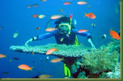 Kenia Adventures - Scuba Diving