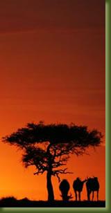 Kenya Adventures - Camping Safari